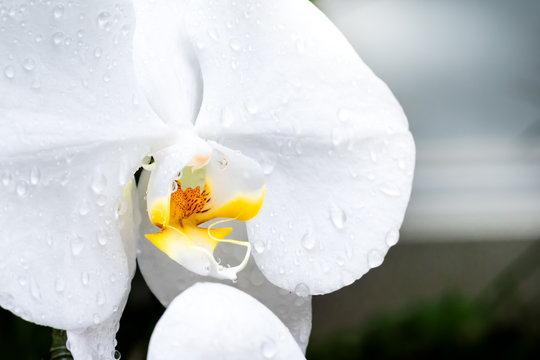 Flower and droplet in Rainy season