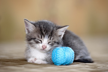 Little pretty funny kitten-animal world and Pets