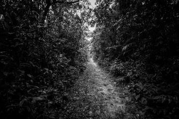 Keuken foto achterwand Weg in bos Pathway Amidst Trees In Forest