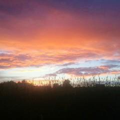 Foto auf Gartenposter Koralle Silhouette Trees On Landscape Against Sky At Sunset