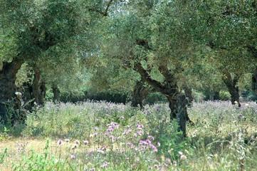 Foto auf Gartenposter Olivgrun Trees On Countryside Landscape