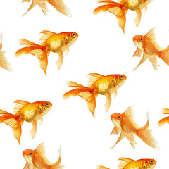 set of goldfish