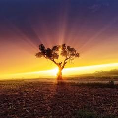 Foto auf Gartenposter Aubergine lila Sun Shining Through Trees On Landscape