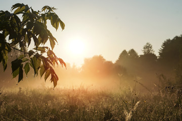 Beautiful morning landscape in light fog and the sun. A tree branch glows in the evening. Stock nature background for design.