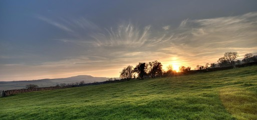 Scenic View Of Grassy Field At Sunset