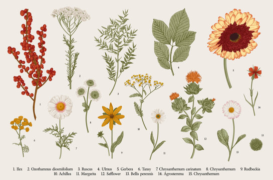Vintage vector botanical illustration, Set, Autumn flowers, berry and leaves, Colorful