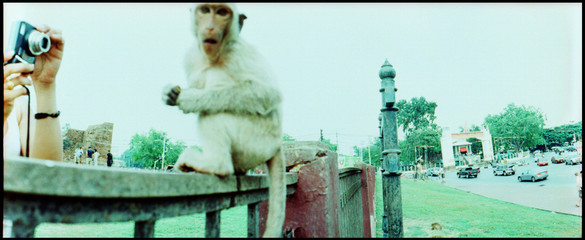 Woman Taking Picture Of Monkey Sitting On Fence In City