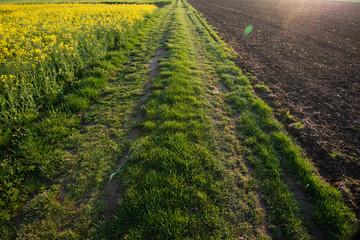 Polna droga na wsi