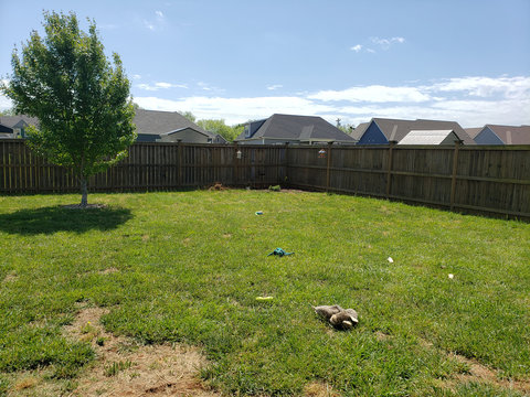 Back Yard with Dog Toy and Bone Mess