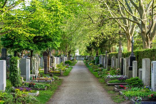 Friedhof im Frühling / Grabpflege: frisch bepflanzte Gräber und schöne grüne Bäume