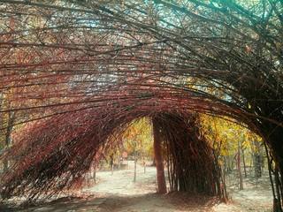 Keuken foto achterwand Weg in bos Long Empty Pathway Along Trees In Forest