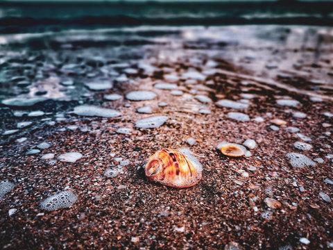 Beautiful whelk at the seashore bubbly water