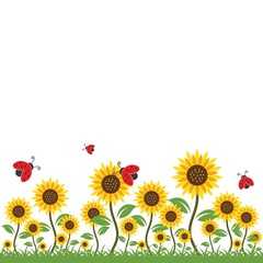 sunflowers background vector illustration