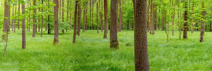 Wald, Panorama, Natur in Sachsen