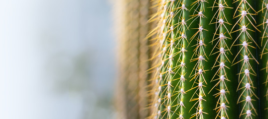background of a cactus with long spines