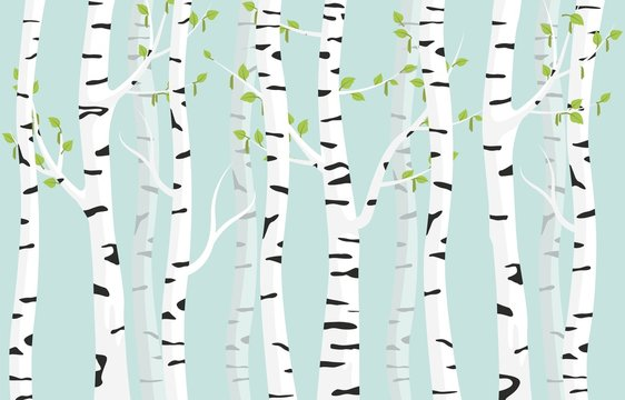 Birch forest background. Spring birch green young leaves spotty bark on tree black vector spots white trunk, romantic seasonal park april grove background revived spring.