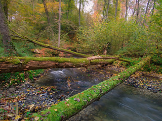 Photo sur Plexiglas Rivière de la forêt Fallen trees in the forest by the flowing river.