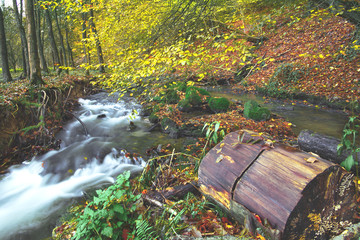 Photo sur Plexiglas Rivière de la forêt River flowing in the forest.