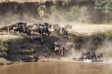 wildebeest migration in serengeti national park tanzania