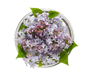 lilac flowers floating in a glass bowl, top view, isolated on white