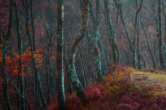 Afternoon sunlight lit mossy trees in autumn coloured woodland.Tranquil nature scene in Scottish Highlands.