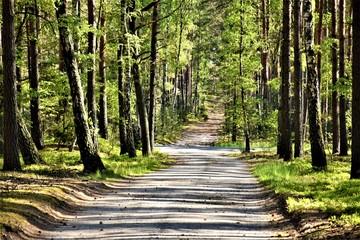 Foto op Textielframe Zwavel geel Utwardzona droga leśna