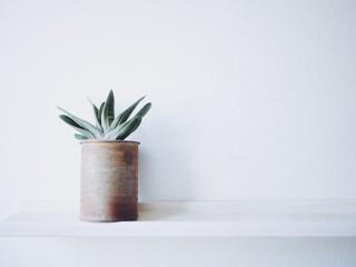 Fototapeta Close-up Of Potted Plant On Shelf obraz