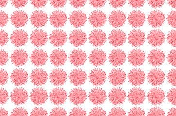 Pink Chamomile or gerbera isolated on white seamless pattern.