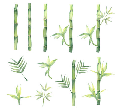 Collection of watercolor bamboo, bamboo leaves. These elements are well suited for creating your own design of textiles and paper products. Hand drawn.