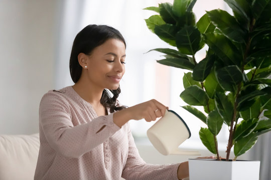 African woman holding can watering indoor houseplant. Housewife busy with housework enjoy process takes care of domestic lush flower. Good hobby, clean air at home, gardening and housekeeping concept