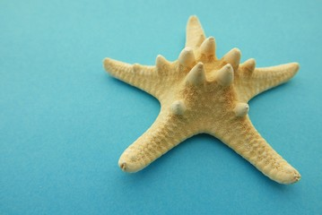 High Angle View Of Artificial Starfish On Blue Background