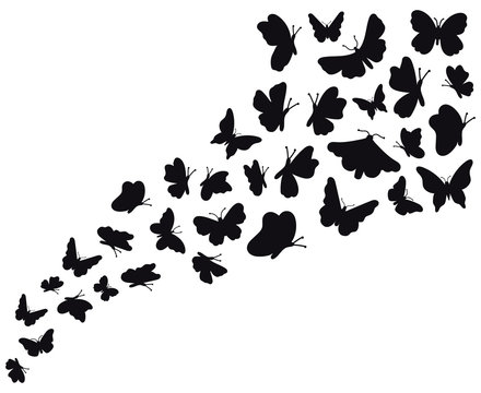 Butterfly flow silhouettes. Flying butterflies graphic wave, black flower butterflies silhouette. Papillon sketch vector background illustration. Silhouette butterfly summer wildlife