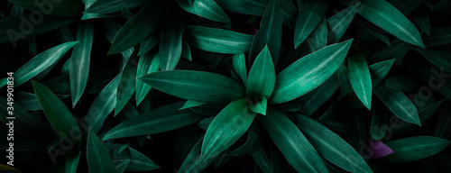 Wall mural closeup nature view of green leaf in garden, dark wallpaper concept, nature background, tropical leaf