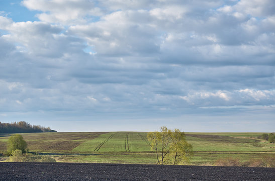 Landscape with spring agricultural fields