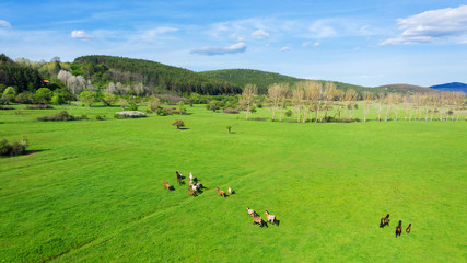 Birds eye view of horses grazing on pasture.