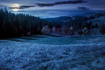 forest in red foliage at autumn night. trees with branches with red foliage in forest. hillside in mountains with high peak in the distance in full moon light