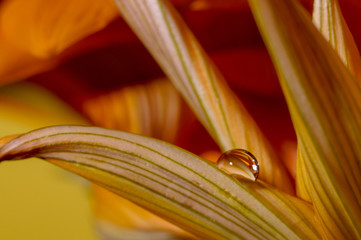 krople wody na płatkach i liściach kwiatów kolorowe makro