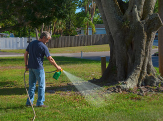 Homeowner man spraying weed killer on his front yard with a hose attachment full of chemicals that kills weeds and fertilizes the grass. - fototapety na wymiar