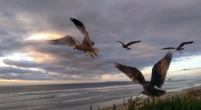 Birds Flying By Sea Against Cloudy Sky At Dusk