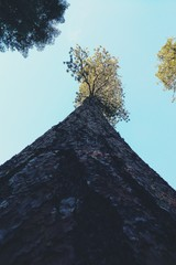 Wall Murals Low Angle View Of Tree Growing Against Clear Sky