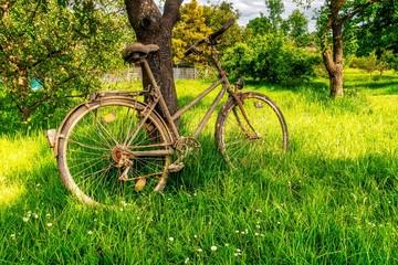 altes schmutziges Fahrrad im Frühling auf grüner wiese an Baum gelehnt