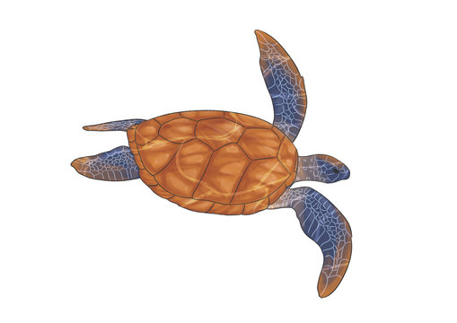 Sea turtle with water effects