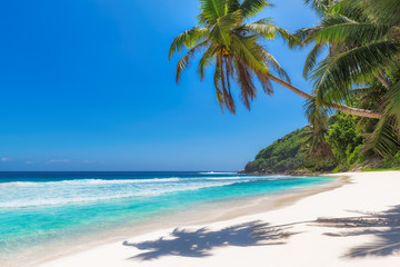 Caribbean beach with white sand and coco palms. Summer vacation and tropical beach concept