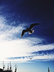 Foto auf AluDibond Tauchen Low Angle View Of Seagull Flying Against Sky