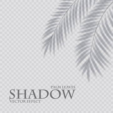 Palm leaf shadow transparent effect. Exotic design element.