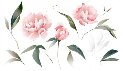 Set flowers peonies, leaves. Wedding concept. Floral poster Vector peony, watercolor decorative greeting  design