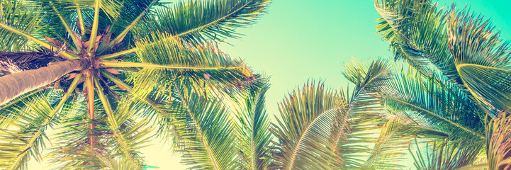 Wall Mural - Blue sky and palm trees view from below, vintage style, tropical panoramic background