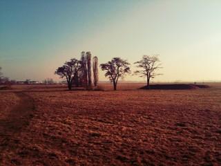 Fototapeten Kastanienbraun Trees On Landscape Against Clear Sky
