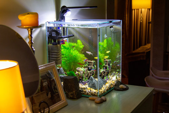 Aquarium with fish on a table. Nano Aquarium in the home interior. Light in the aquarium in the evening. Cozy interior.