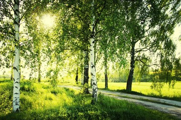 Fototapeten Gelb Country Road Surrounded By Grassy Landscape And Tees In Sunny Day